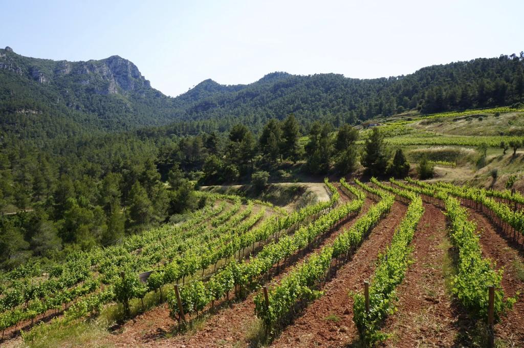 Viñas-de-Vinyes-Domènech