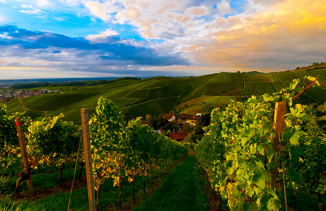 Württemberg-Vineyards-Germany-famous-vineyards