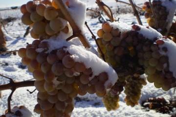 Nieve y uvas
